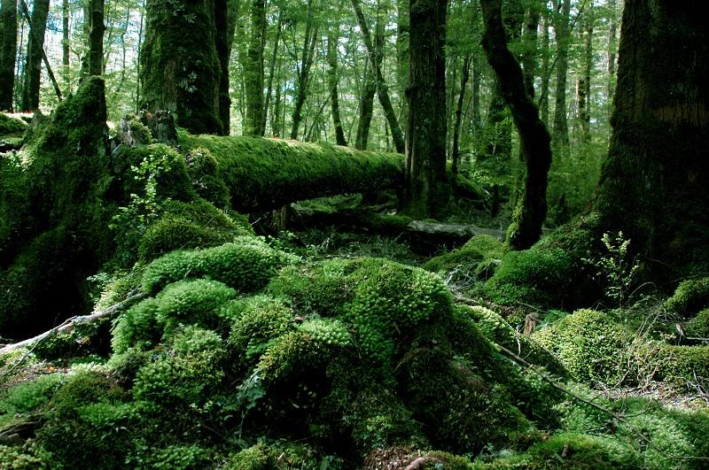 向機王致意-自然風景篇