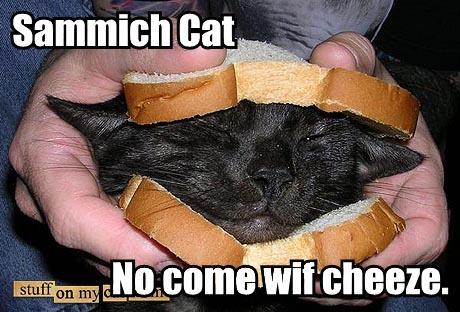 Sammich Cat Macro