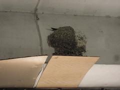 屋簷的燕子