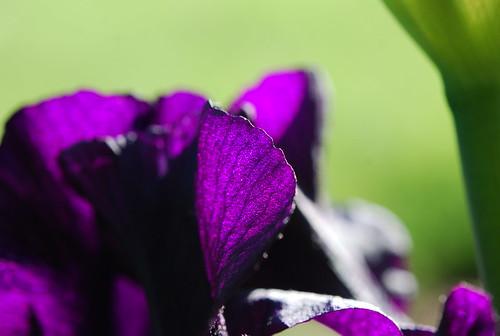 Darkest Iris 2 - 5/12/09