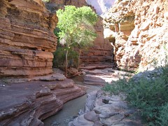 Grand Canyon Oct 2007_25 (Owen Richard) Tags: arizona desert canyon backpacking grandcanyonnationalpark deercreektrail tapeats tapeatscreek