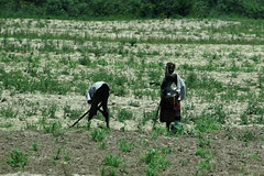 344 In the fields (mothclark62) Tags: africa people landscape fields agriculture namibia southernafrica