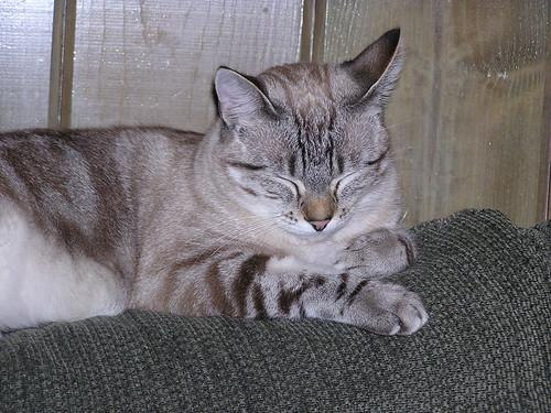 Sofa Cat 04