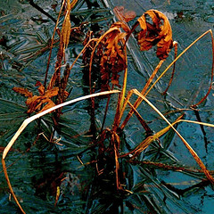 Ice in my Wild River! (Denis Collette...!!!) Tags: canada hot ice bravo quebec rivire glace sauvage diamondclassphotographer deniscollette wildriver sarahmclachlan icequeen
