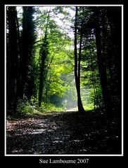 Into the mist (susie 1) Tags: trees light mist nature leaves forest dark woods novideo blueribbonwinner goldenmix mywinners diamondclassphotographer flickrdiamond wonderfulworldmix thatsbostin theperfectphotographer
