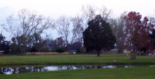 Pond at evening