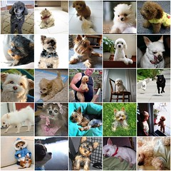 Small Dogs Mosaic