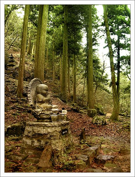 лес с буддой