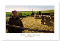 THE SHEPHERD (Mohsan') Tags: algeria pentax arabic oran berger aficionados k10d wahran justpentax aficionadosduk10dgx10