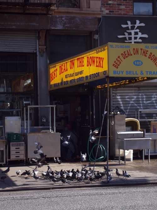 pigeons on a sidewalk, The Bowery, Manhattan, NYC