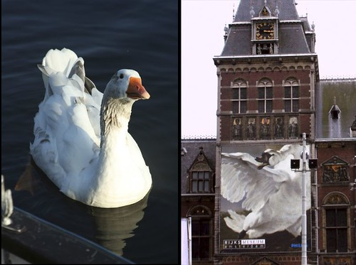 swan diptych