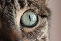 09 Lucy (CatsFrauPau) Tags: eye female cat canon eos 350d lucy katze makro canoneos350d eos350d canoneos auge märz canoneosdigitalrebelxt catseye tanja cateye ratingen eosdigital katzenauge eosrebelxt märz2008