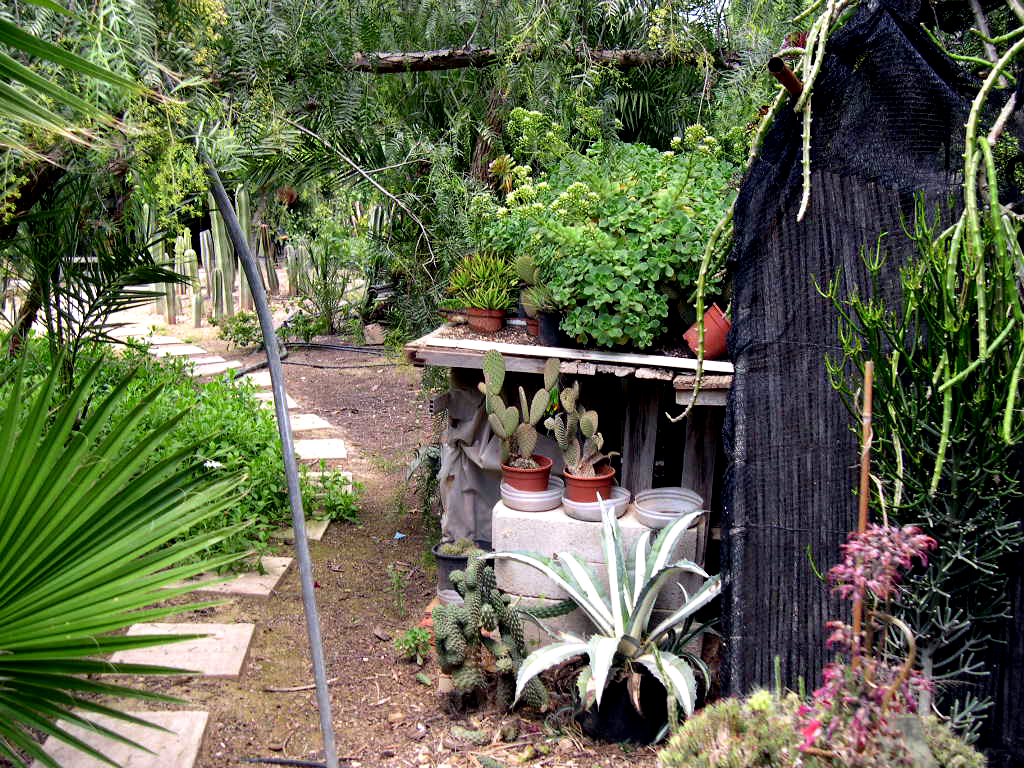 Foro de infojardn ver mensaje individual fotos de - Jardines con cactus y piedras ...