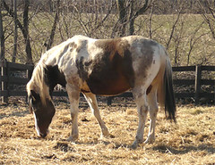 Horse at Tom White's Place