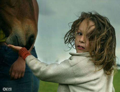 chevaux15