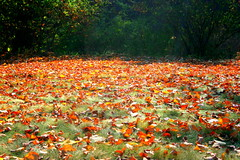 Autumn Leaves (Manny Pabla) Tags: autumn usa fall grass leaves america canon us newjersey unitedstates path unitedstatesofamerica nj somerville leafs gardenstate bridgewater somersetcounty happinessconservancy