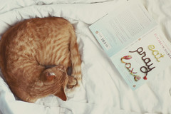 eat, pray, love.....she forgot nap. (*Cinnamon) Tags: nap mycat mybook hetakesthebestnaps