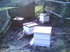 Beehives just arrived