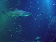 Universeum anordnar barnkalas med hajtårta