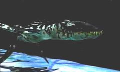 02 liopleurodon in time machine