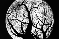 Capillari (Mas-Luka) Tags: uk november autumn england sky blackandwhite bw tree london nature silhouette outdoors lomo lomography solitude novembre loneliness bare branches natura fisheye cielo trunk albero tronco autunno earlscourt londra biancoenero rami 2007 inghilterra solitudine spoglio humanretina