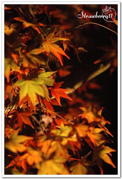 20071121京都永觀堂夜楓(24)