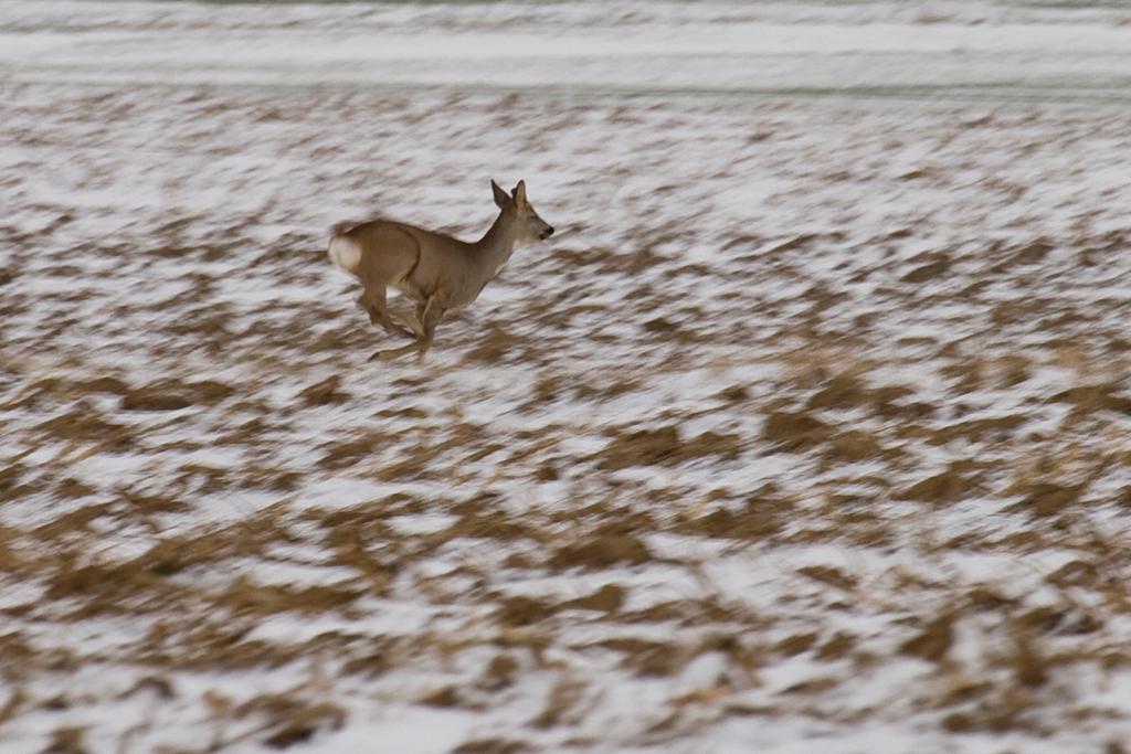 Chasing deers-1