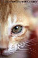 Cat Eye (SanforaQ8) Tags: eye animal cat born photos free photographers finepix kuwait   105macro s5pro sanfora