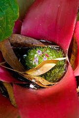 Catherine's Garden: Bromeliad (Craig Jewell Photography) Tags: flower leaves garden iso200 leaf suburban australia brisbane catherine bromeliad bromelia f63 bardon 1125sec pentaxk10d tamronspaf2875mmf28xrdia09 cpjsm craigjewellphotography