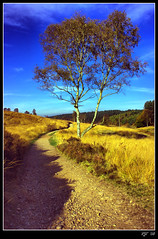 Cannock Chase (rjt208) Tags: uk greatbritain blue trees england sky west green forest canon landscape outdoors eos britain wildlife cannock valley chase soe hdr midlands sherbrook tonemapping 400d anawesomeshot aplusphoto superbmasterpiece megashot rjt betterthangood rjt208 bigpicture2008 stokeandstaffordshire