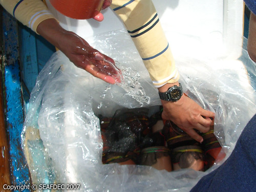 Acclimating the abalone