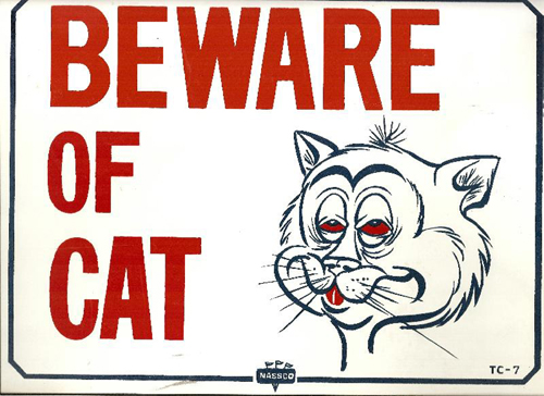 Beware Of (Drunk?) Cat