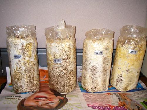 珊瑚菇 & 銀茸