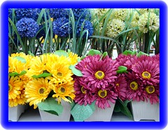 Flowers to cheer you up (Free Of The Demon) Tags: city color colors beautiful beauty america wow colorful niceshot searchthebest nj adorable jersey monmouth anthony picturesque soe breathtaking pleasant pictureperfect longbranch smrgsbord enjoylife emozioni cubism iloveit naturesfinest razzie supershot 5photosaday fineartphotos abigfave anawesomeshot colorphotoaward impressedbeauty amazingshots almostanything diamondclassphotographer eyecandyartpost anotherdiamond ysplix ilovemypic freenature theunforgettablepictures onlythebestare theunforgettablepicture eperke brilliant~eye~jewel theunforgettablepicturesgroup awwwed betterthangood goldstaraward flickrestrellas yourpreferredpicture top20vivid clevercreativecaptures life~asiseeit llovemypic beautyunnoticed ilovemypics flowersarefabulous ~florayfauna~ bellissimoscatto digitaleloguence thegoldproject flowerstocheeryouup gr8photo tbfsgallery llovemypics awesomeblossoms beautifulsecrets freeofthedemon