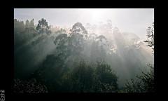 Morning Raga (Ezhil Ramalingam) Tags: hope rays soe munnar ysplix goldstaraward