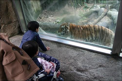 木柵動物園16