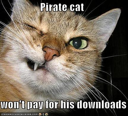 funny-pictures-pirate-cat-grimaces