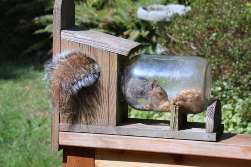 bird feeder with squirrel