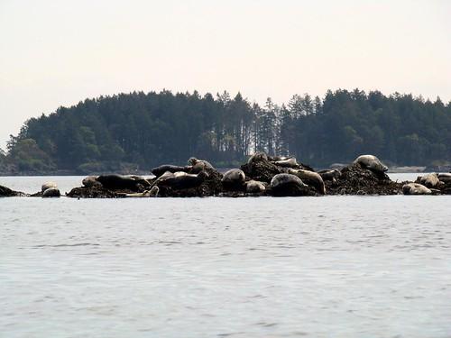 2008-05-04 Coal Island 397