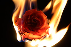 Burning Desire (Remko.) Tags: red hot flower macro love rose night canon fire eos roos burning burn passion 60mm branden brand bloem efs60mm remko passie verlangen burningdesire anawesomeshot brandend