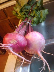 scarlet queen turnips (red)