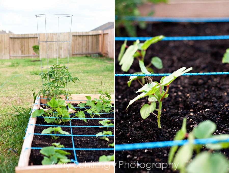 Garden01 B