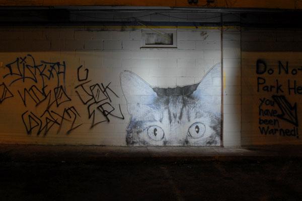 Night Gato (Painting with Light)