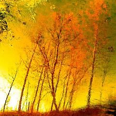 Here Comes The Sun! (Denis Collette...!!!) Tags: light sun canada reflection soleil friend bravo quebec lumire rivire reflet amie sauvage palabra firstquality magicdonkey abigfave artlibre deniscollette lightspectral wildriver world100f herecomesthesun georgeharrison