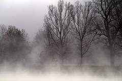 Basel - early morning (dive-angel (Karin)) Tags: tree water fog river switzerland nebel basel rhine rhein baum abigfave