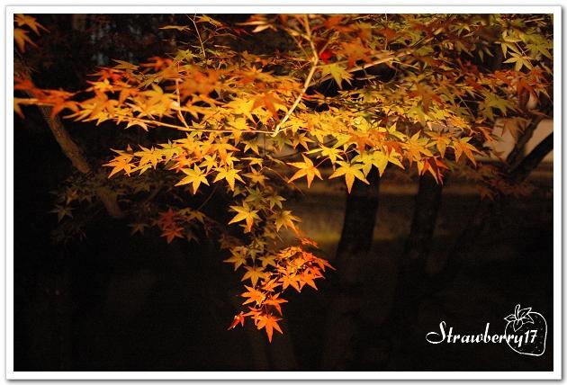 20071121京都永觀堂夜楓(11)