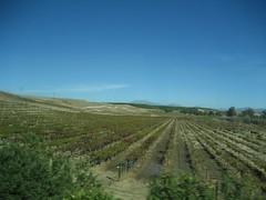 Vineyards at Temecula. (12/05/2007)