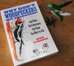 Why Don't Woodpeckers Get Headaches?