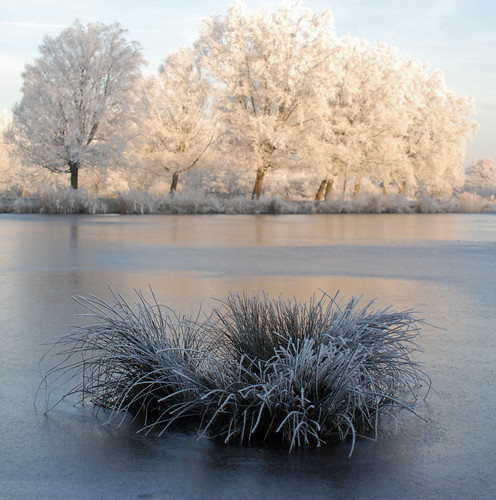Winter in Holland, frozen mist on trees.
