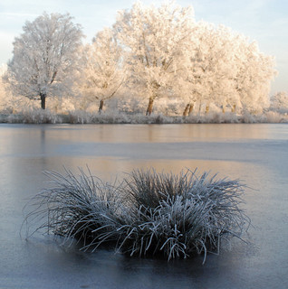 Winter in Holland, frozen mist on trees.